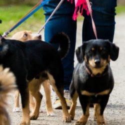 service promenade chien