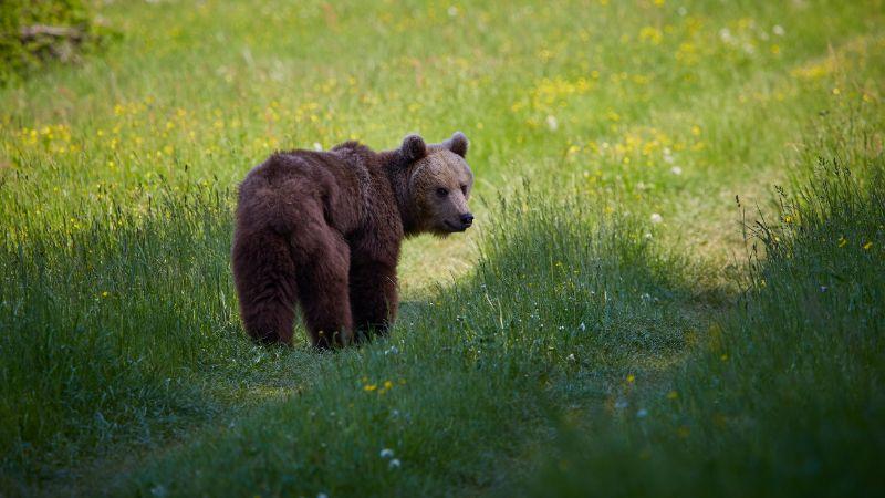 Peut-être cet ours laissera-t-il une empreinte ?