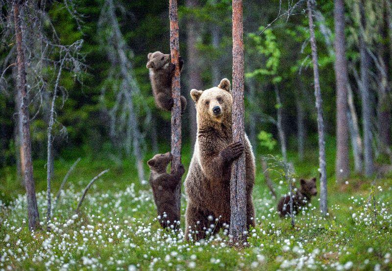 Une maman ours et ses petits dans le noir.