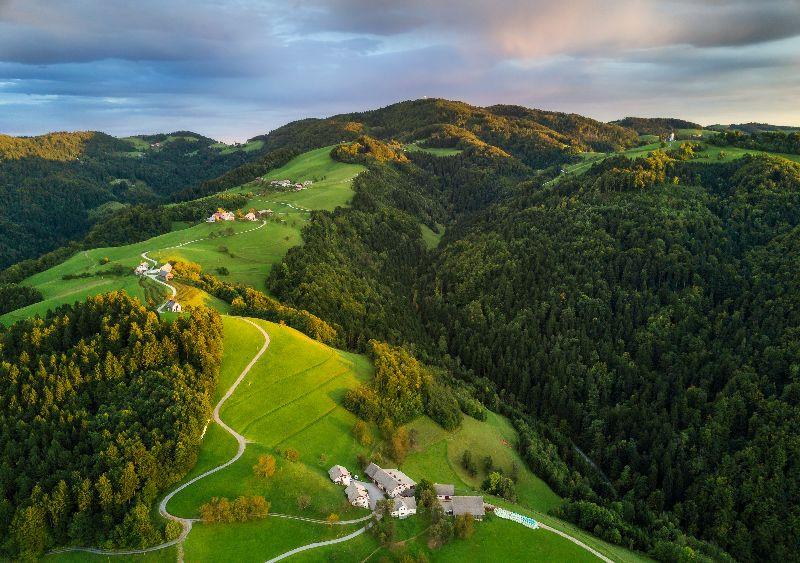 Les forêts de Slovénie.